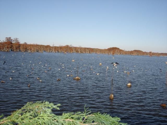 Reelfoot lake for Reelfoot lake fishing report